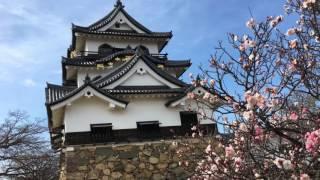 2017年3月25日 彦根城見学 NHK大河ドラマで放送中の井伊直虎の影響でか1...