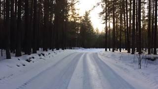 Лес в декабре Тюмень