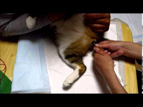 猫 尿導カテーテル 1カメ2カメ