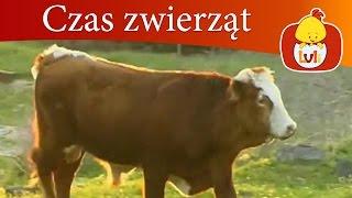 Czas zwierząt - Chrząszcz + Krowa, dla dzieci Luli TV - Videos for babies