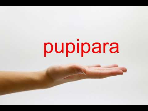How to Pronounce pupipara - American English