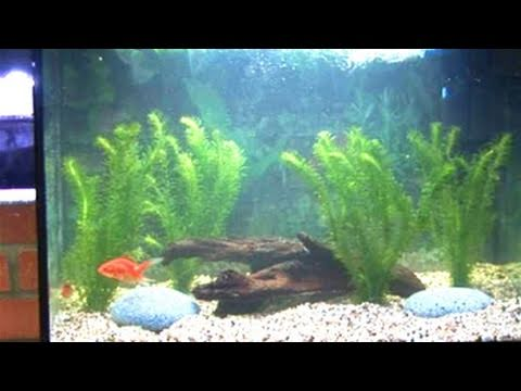 How to clean a fish tank youtube for Youtube fish tank