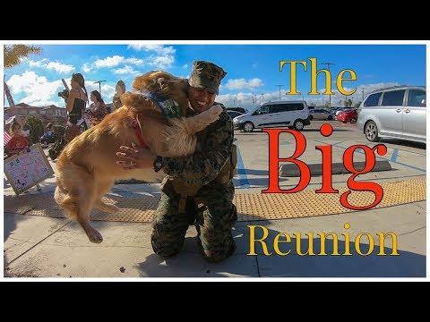 Golden Retriever Welcomes His Marine Home | Oshies World