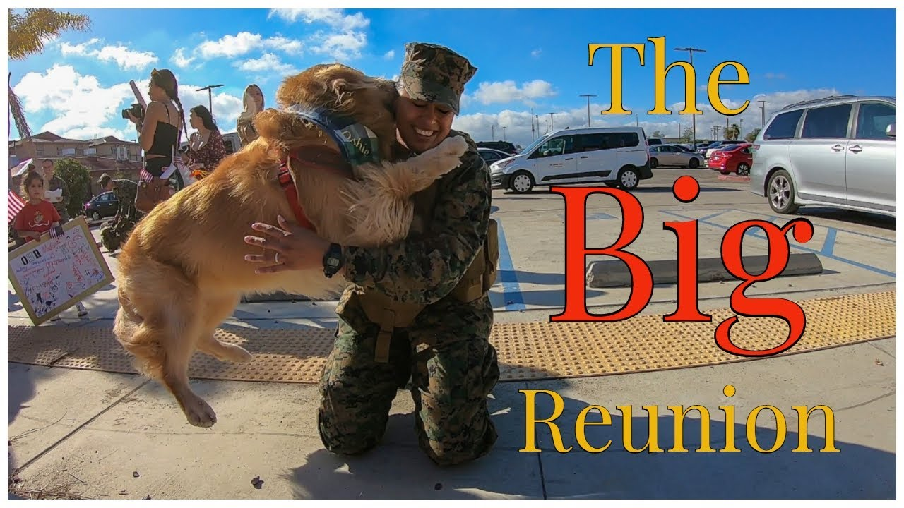 Golden Retriever Welcomes His Marine Home