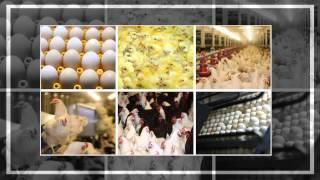 Egevizyon Yem Tarım Hayvancılık San.Tic.Ltd.Sti.