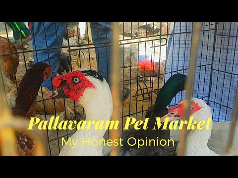 Valuable Reasons to Visit Pallavaram Sandai (Pet Market)...