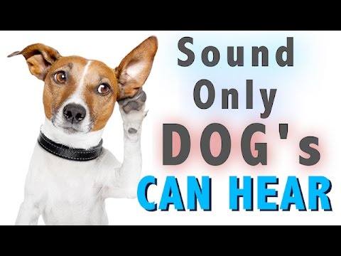 Sound Dogs Can Only Hear | HQ