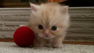 Kitten Dance...?