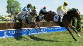 Fly Baby Fly - Steeplechase Racing