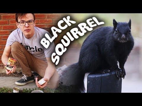 CATCHING A BLACK SQUIRREL!!! - Save the Squirrels Initiative