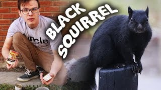 Download CATCHING A BLACK SQUIRREL!!! - Save the Squirrels Initiative Mp3 and Videos