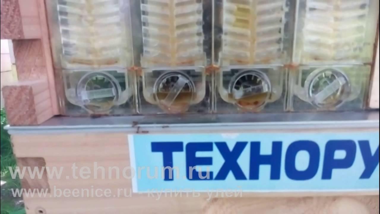 Улей из которого вытекает мёд. Тест в России. 7 часть - YouTube