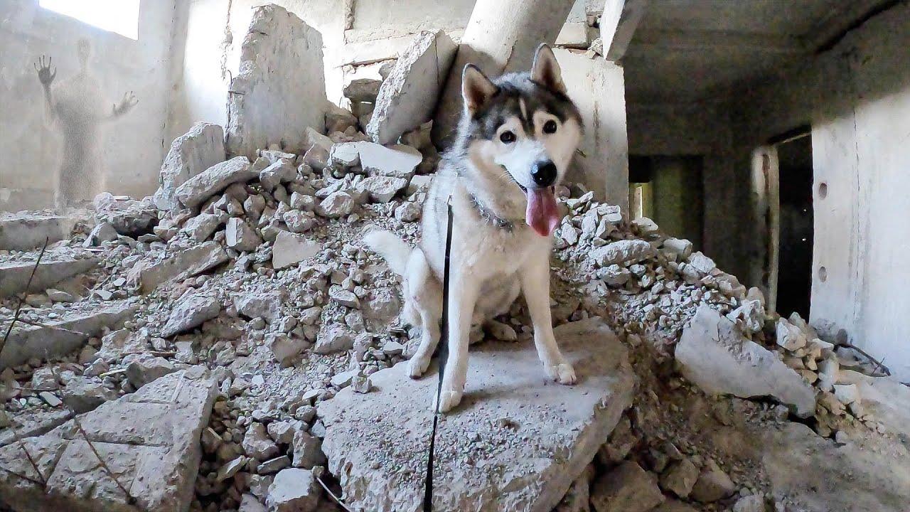ХАСКИ ПРОНИК В ЗАБРОШЕННЫЙ ГОРОД ПРИЗРАК / ужас собаки видит мистику на заброшке