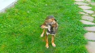 DOGVLOG: ВЛЮБИЛСЯ! (Дворняга Джек) Говорящая собака 🐶
