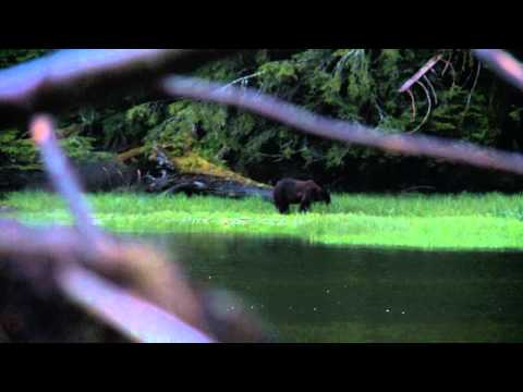 SOA Muzzleloader World Record Grizzly