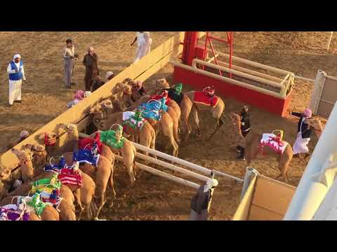 Al Marmoom Camel Racing - Dubai