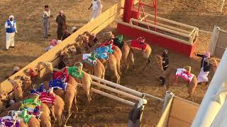 Al Marmoom Camel Racing - Dubai