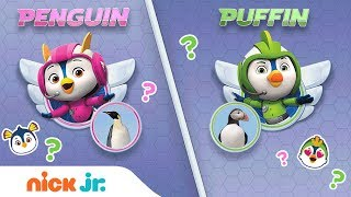 Gambar cover Play a Top Wing Trivia Game 🤔 Penguin or Puffin w/ Penny & Brody | Nick Jr. Games | Nick Jr.