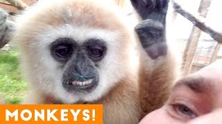 Download Funniest Monkey and Primate Videos of 2018 | Funny Pet Videos Mp3 and Videos