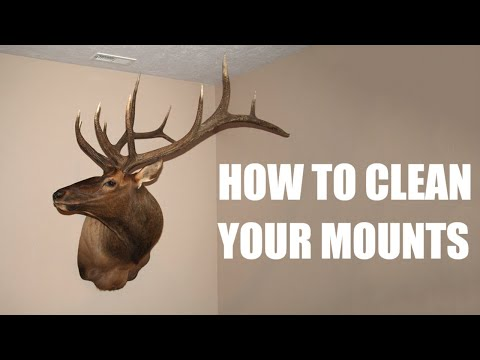 Taxidermy Tip's - How To Clean And Maintain Your Mounts