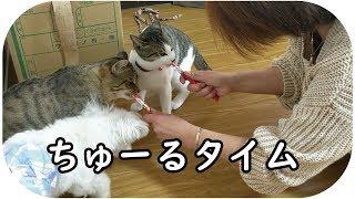 秋田犬らんぷと柴風スーちゃんは別部屋待機中です。 ぼんスーちゅーに、...