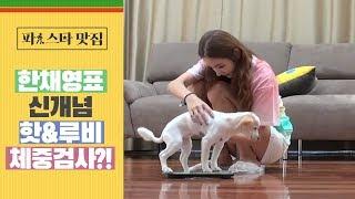 [파!스타 맛집]  한채영표 ※신개념※ '체중검사'?!