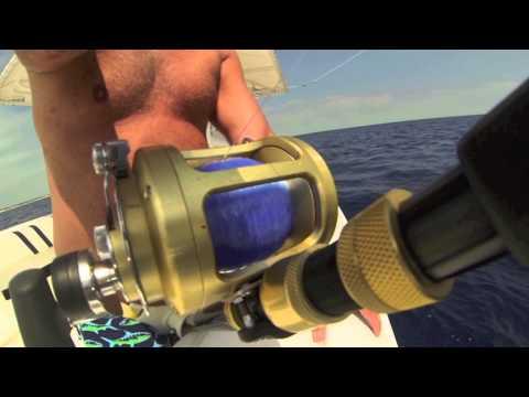 Blue Marlin Bahamas
