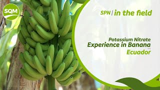SPN in the field, Banano – Ecuador