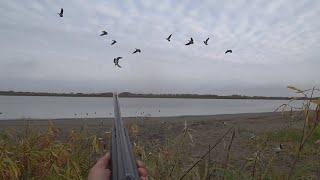Осенняя охота на казарку 2020
