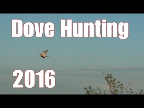 Dove Hunting Opening Day 2016