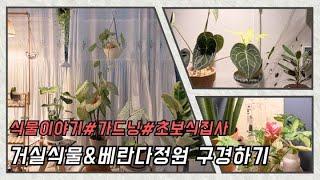 거실식물&베란다정원 구경하기, 초보식물집사