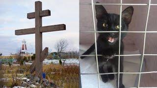 Эту Кошку Нашли Привязанной к Кресту на Кладбище! То Что Случилось Дальше Убивает Веру в Человечеств