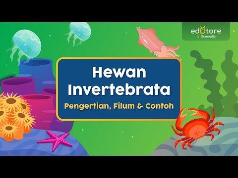 Hewan Invertebrata Pengertian Filum Dan Contoh Belajardirumah Youtube