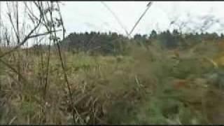 Panther Ligneuville BRF.flv