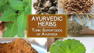 Ayurvedic Herbs, The Tonic Superfoods of Ayurveda