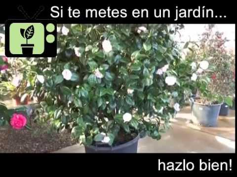 Consejos de Jardineria] Consejo 15 | Jardinería para principiantes ...