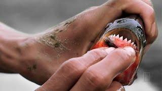 20 Самых опасных животных для человека HD - Документальный фильм