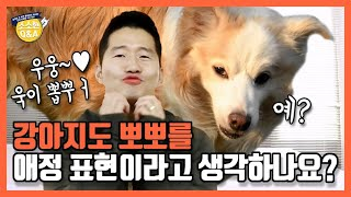 [Eng sub] Do dogs think kisses are an expression of affection?|Kang Hyong Wook's Q&A