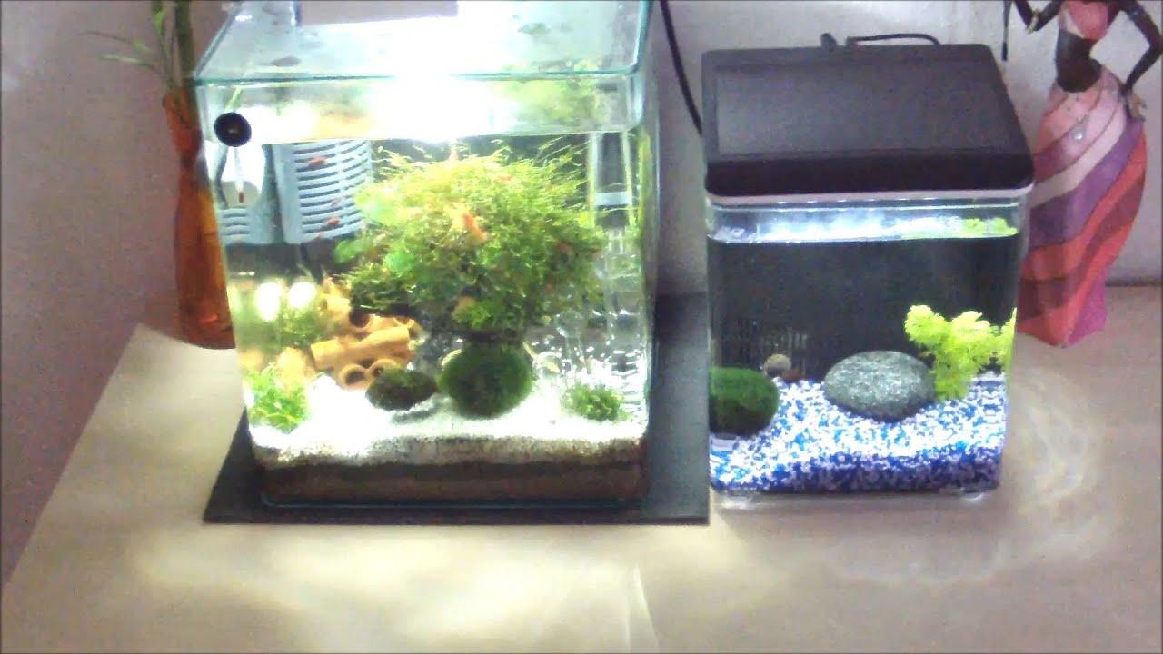 Superfish home 8 nano becken 8 liter kampffisch new for Kampffisch aquarium