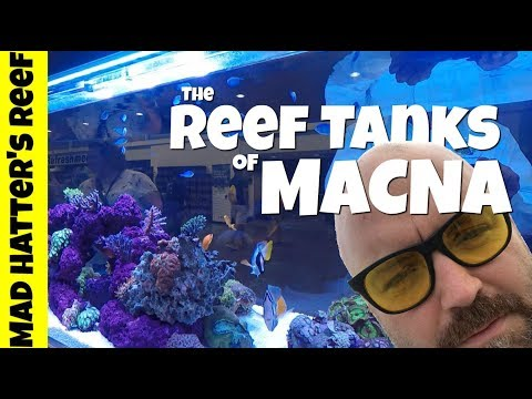 The Reef Tanks of MACNA