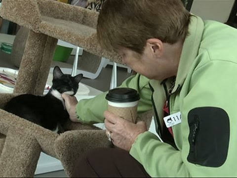 Purring for Business, Cat Cafe Opens in Calif.