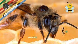8 of 10 - Apicoltura - Patologie delle api - Malattie principali e rimedi naturali - Tutto sulle api