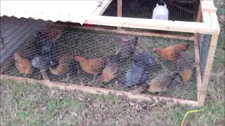 Making A Chicken Tractor Like Joel Salatin's ~ Pastured Poultry