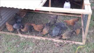 Making A Chicken Tractor Like Joel Salatin
