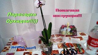 """Как пересадить Орхидею?! Личный опыт от """"Lady Vikki""""."""