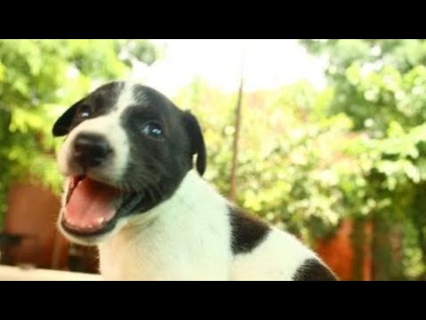 Cutest puppy rescued with injured mom at Animal Aid, India - Animals Rescued  Ep 142