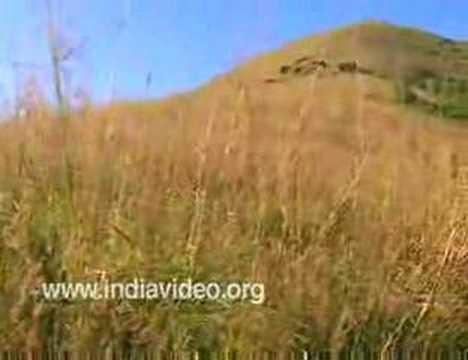 Ranipuram Hills, Kasaragod