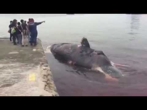 Dead whale spotted in Singapore waters