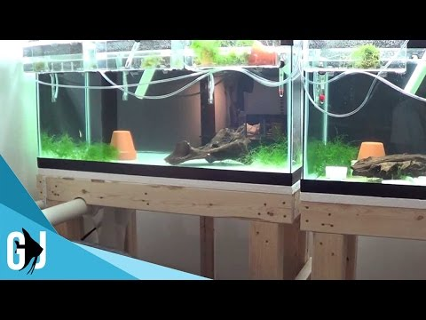 #155:-fish-room-is-running...-with-a-slow-leak---update-monday