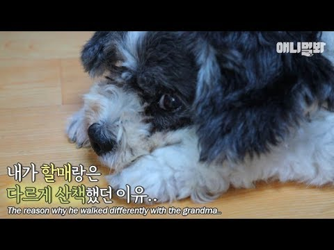 Why the dog walks slowly with grandpa and gets hyped with grandma.. ㅠㅠ..
